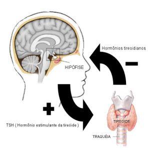 tiroide_hipofise1
